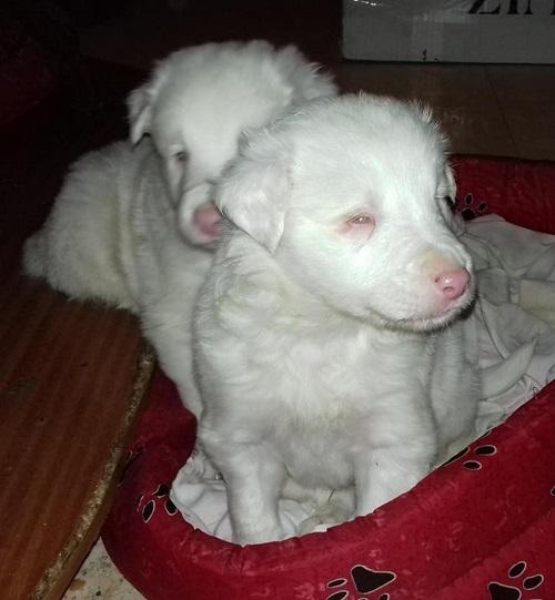 Cachorros ciegos buscan familia que los quiera