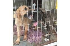 cachorros en adopcion en peligro de sacrificio