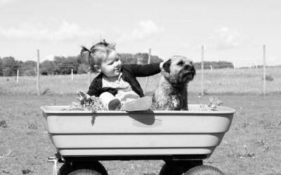 Los niños, los perros y la responsabilidad