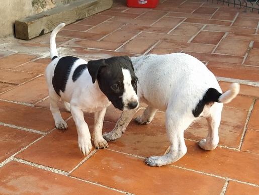 cachorro en adopcion Tarragona