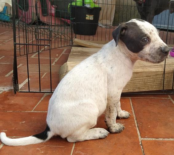cachorrito en adopcion encontrado abandonado