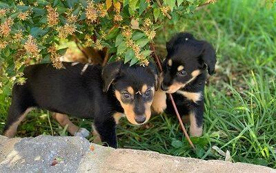 preciosas cachorritas en adopcion – ~MALALA & OLIMPIA~