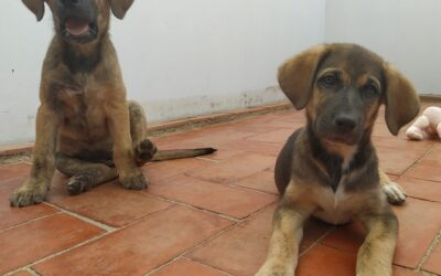 cachorritas en adopcion de 2 meses