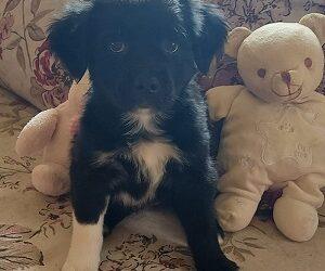 «Campanilla» Cachorro en adopcion granada